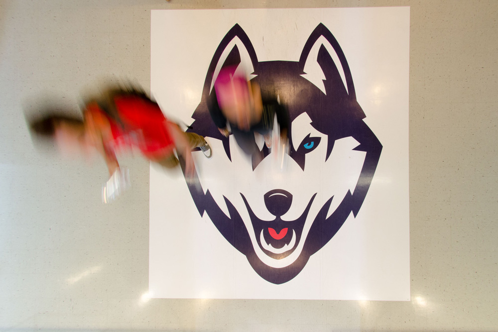 An overhead view of the husky mascot on the floor of Student Union entrance
